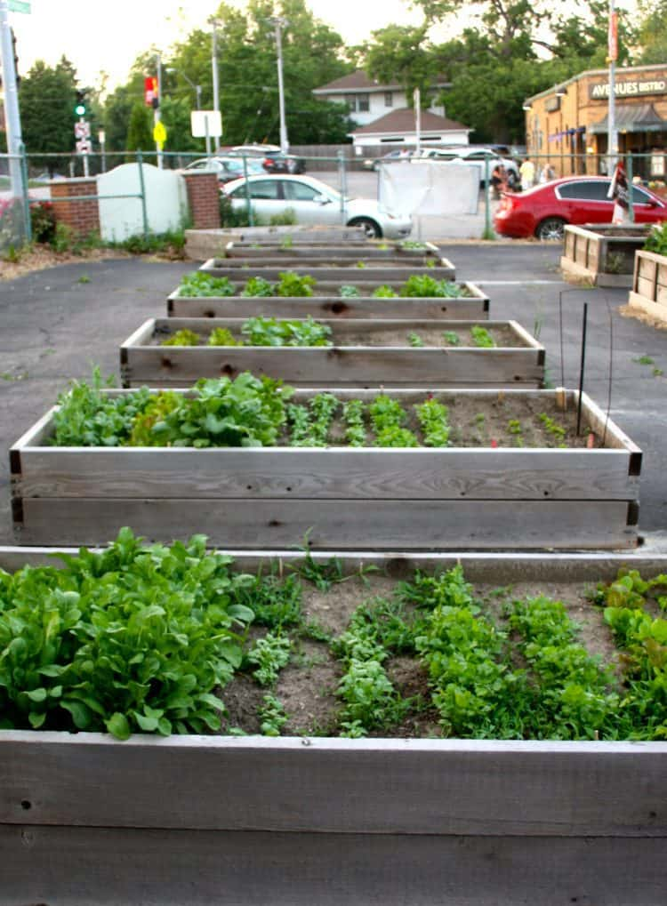 A Raised Bed Garden in the City
