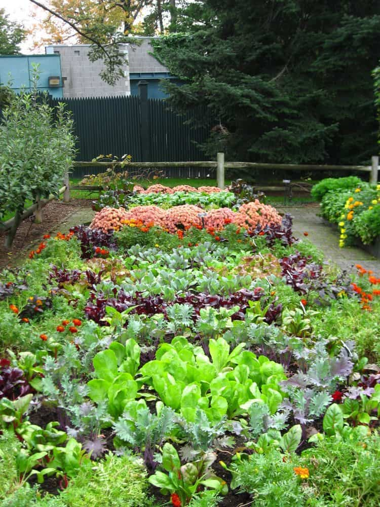 Best 20 vegetable garden design ideas for green living for Great vegetable garden ideas