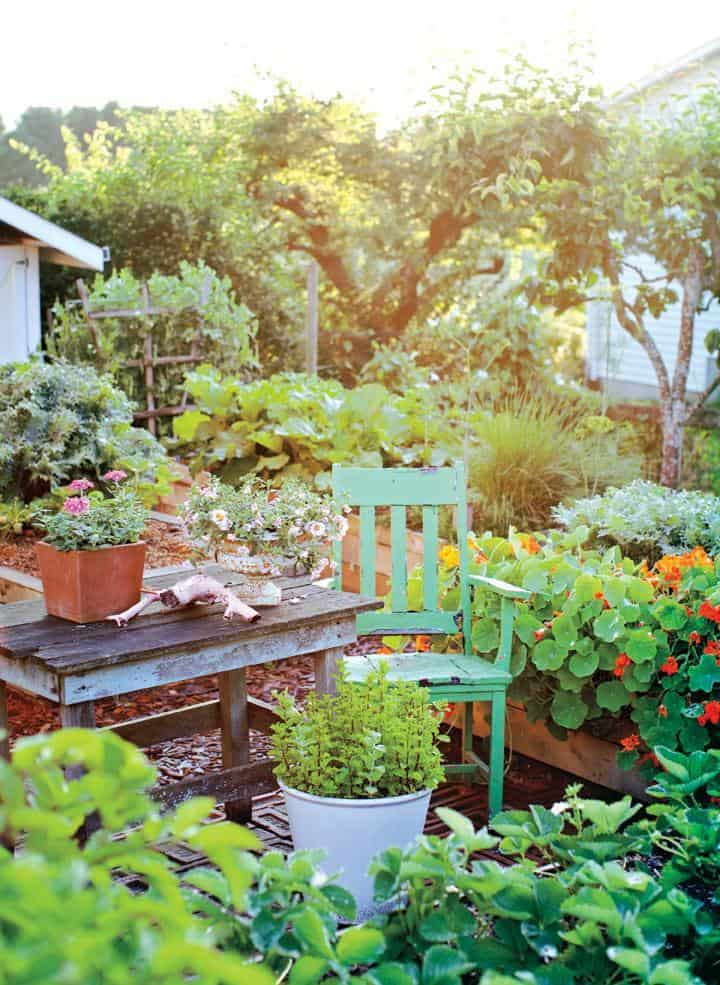 how to create vegetable garden in your backyard