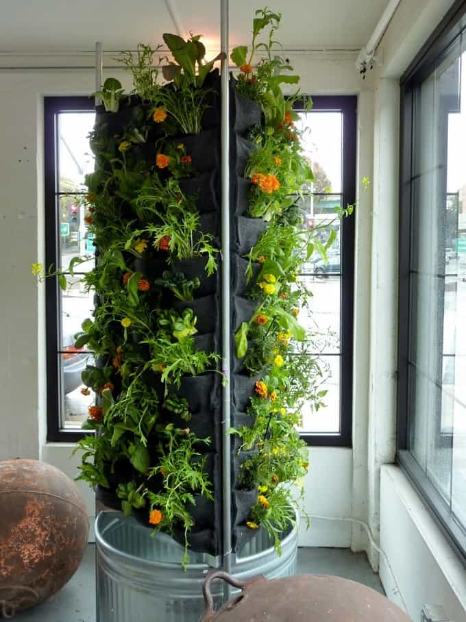 indoor vertical vegetable garden