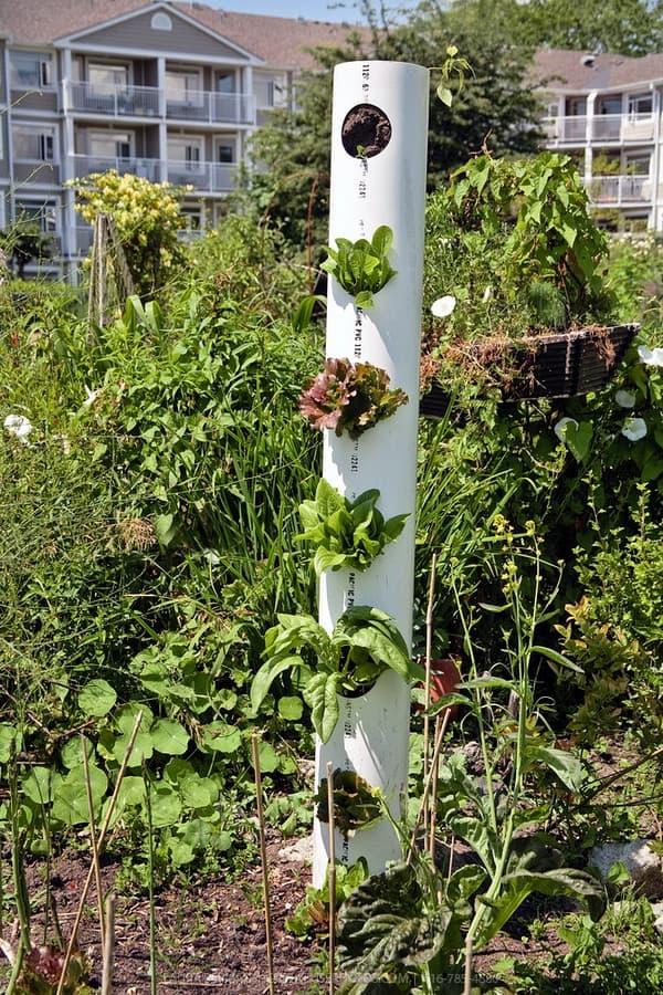 pvc pipe vertical vegetable garden
