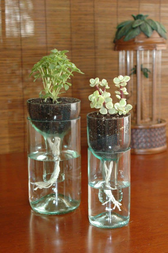 DIY self watering planter from recycled wine bottles