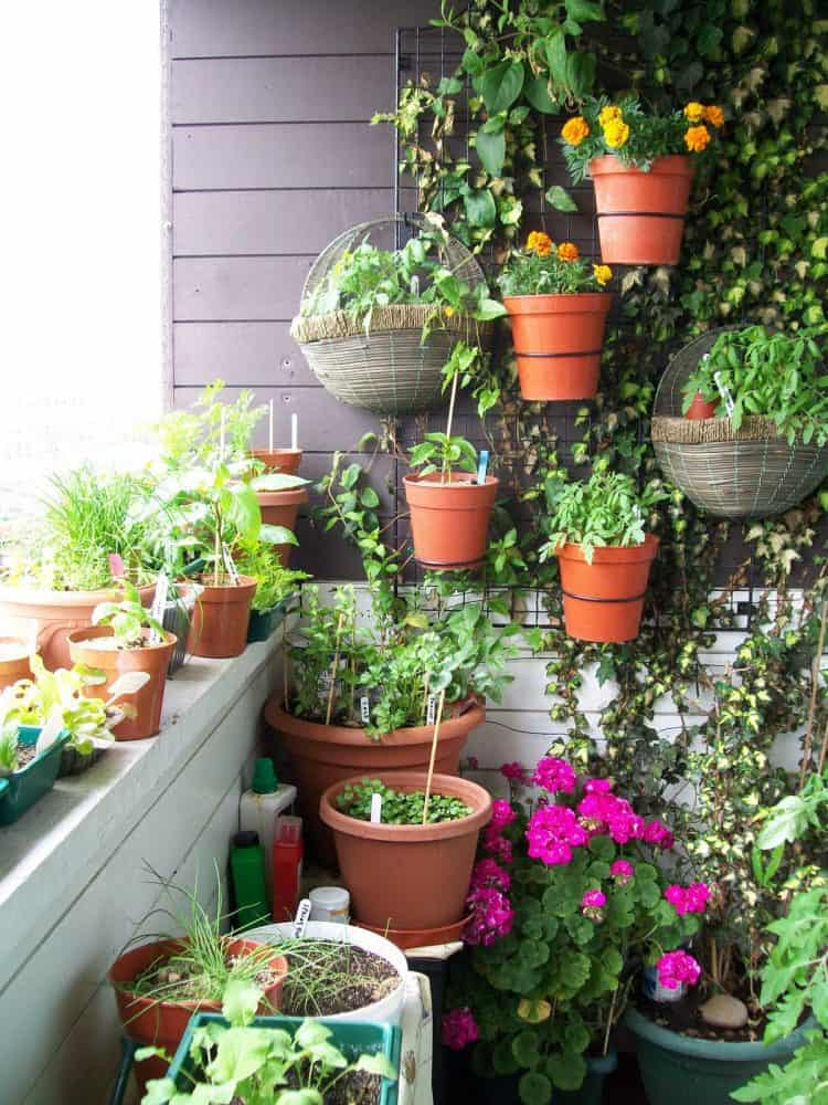 Vertical garden for small balcony