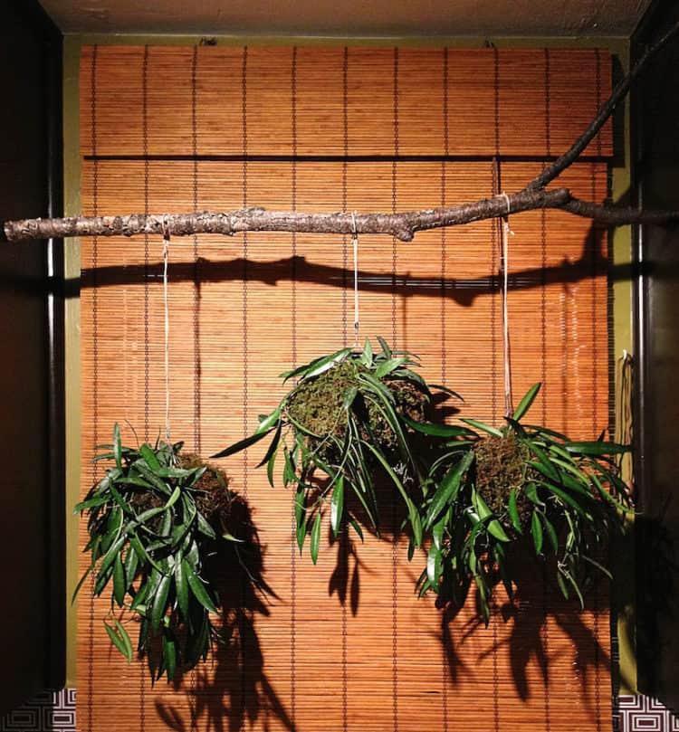 Branch Hanging Planter Balls ideas