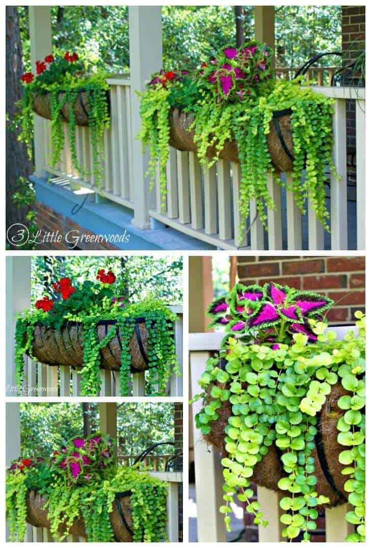Brightly Colored Coleus and Geranium Porch hanging Planters