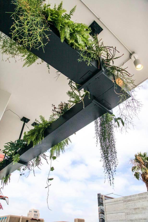 Dramatic Urban Outdoor Hanging Garden ideas