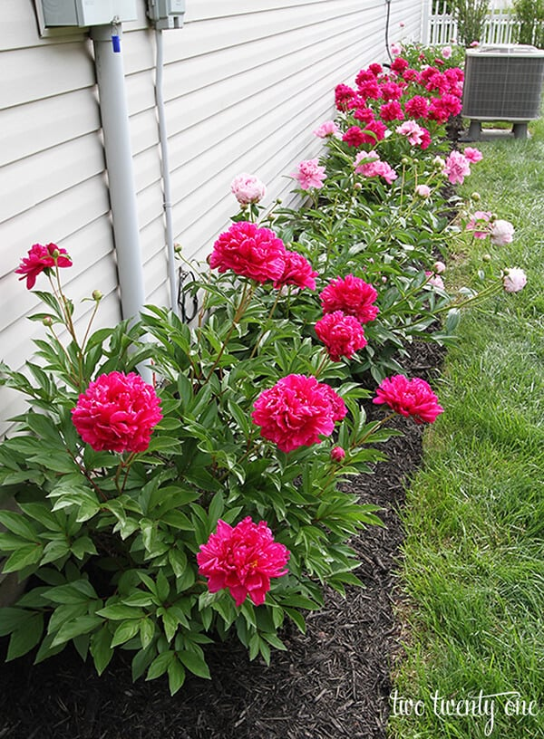 Easy DIY Peony Flower Bed