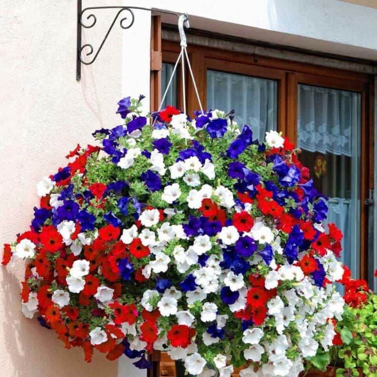 Fourth of July Themed Hanging Basket ideas