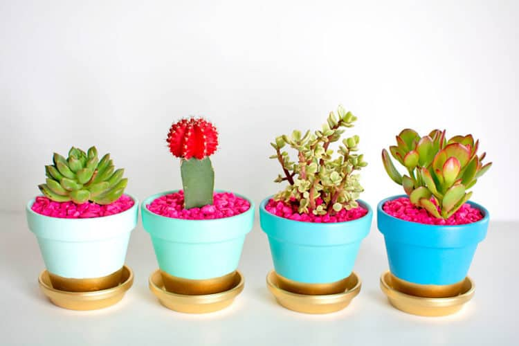 Gold Dipped Pots diy succulent planter