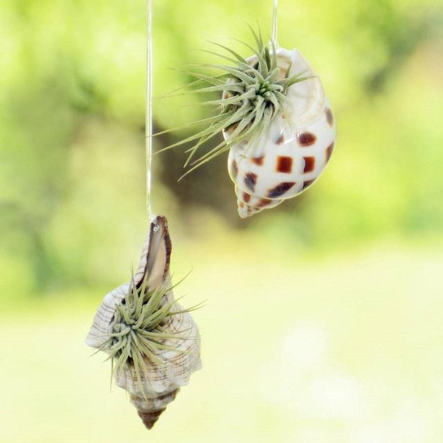 Hanging Seashell Planter ideas