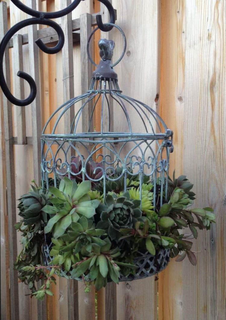 Metal Bird Cage Succulent hanging Planter