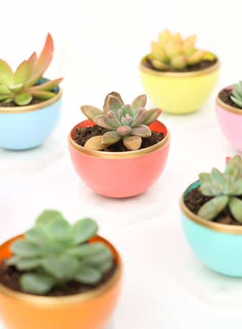 Mini diy Succulent Pots