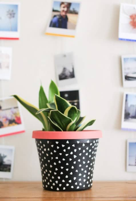 Polka Dot Painted diy succulent Planter
