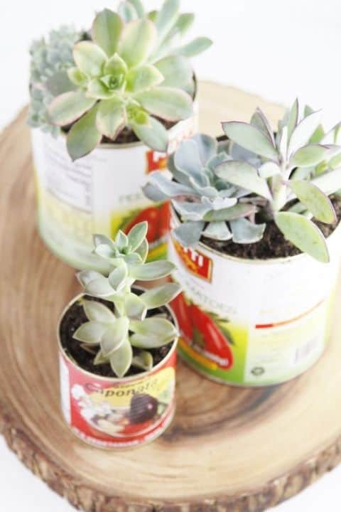 SOUP CANS diy succulent planter