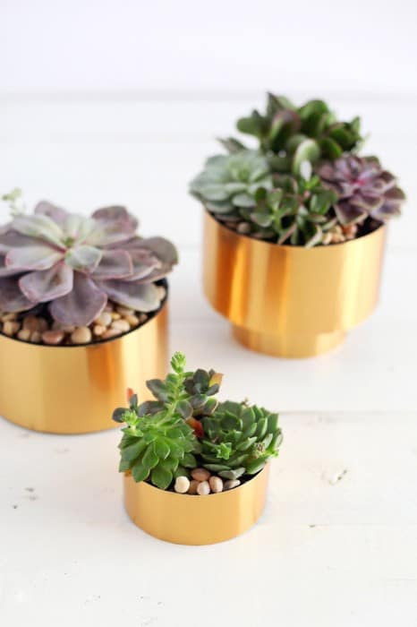 Small Brass diy Succulent Planter
