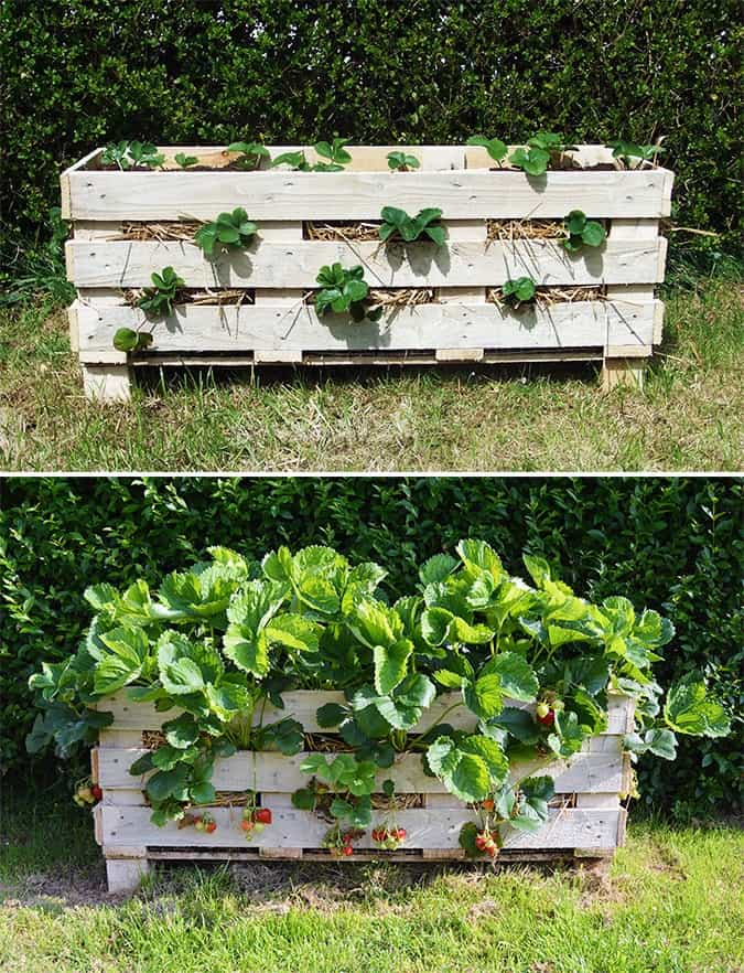 Strawberry Pallet Planter Project
