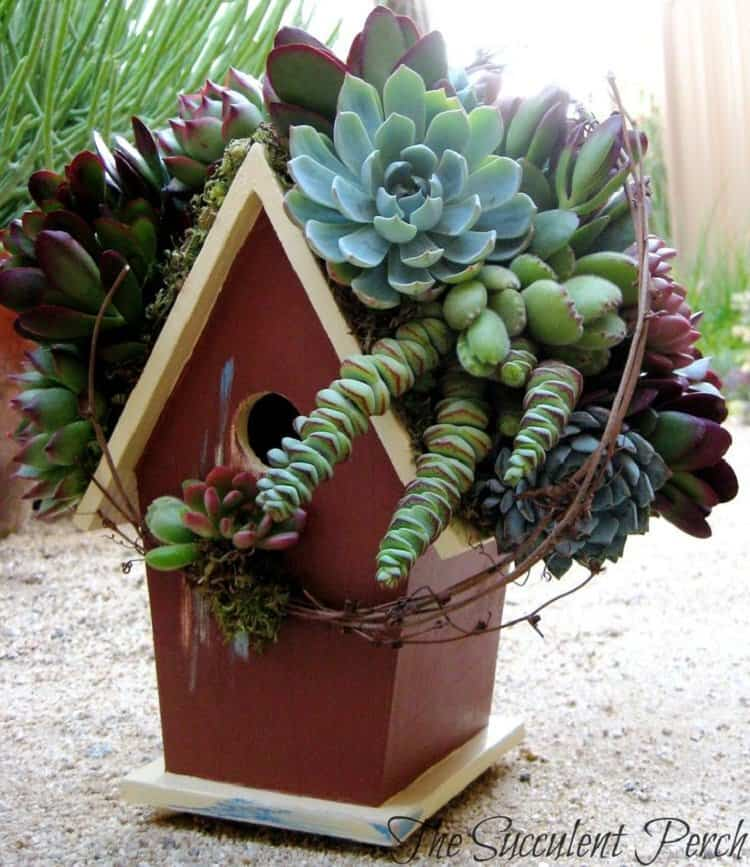 Succulent Bird House
