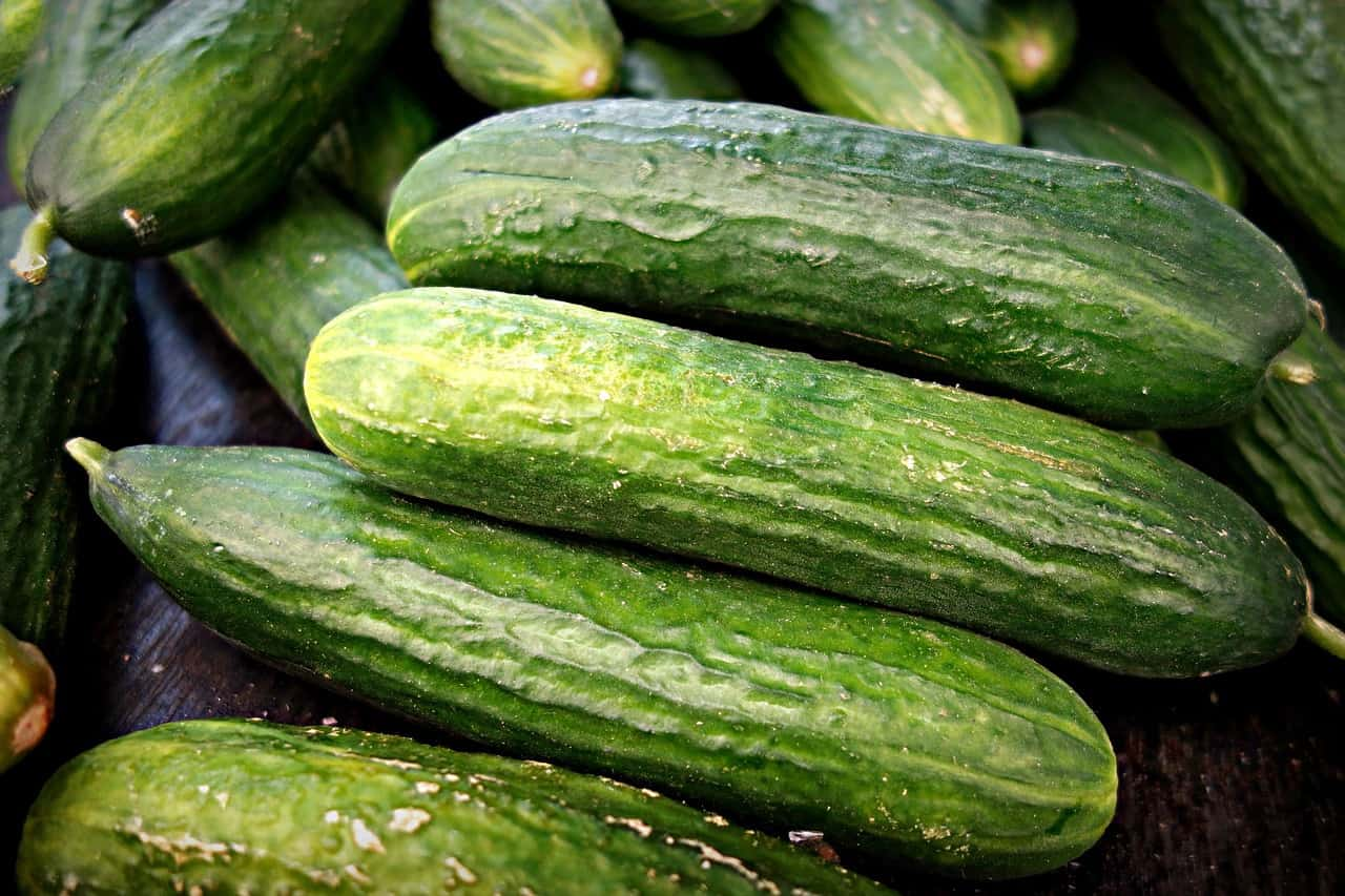how to grow cucumbers indoor and outdoor