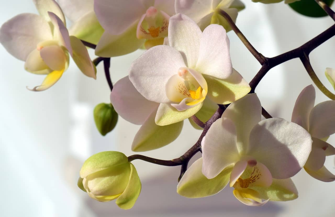 Common Types of Orchid