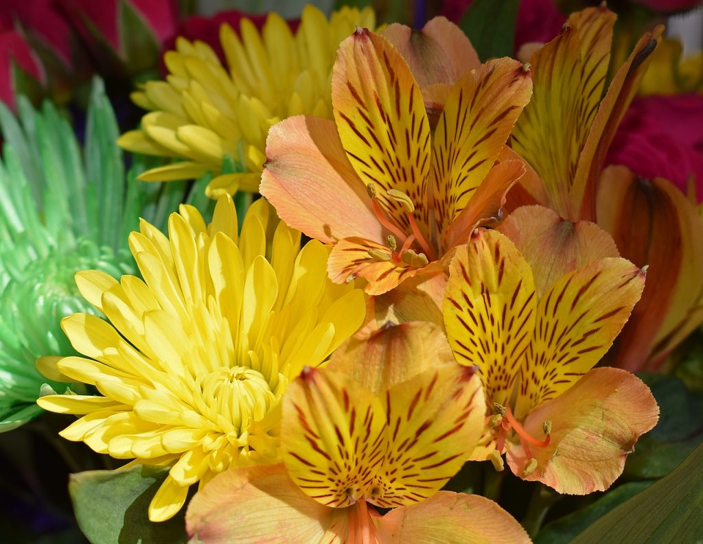 Interesting Facts about Alstroemeria