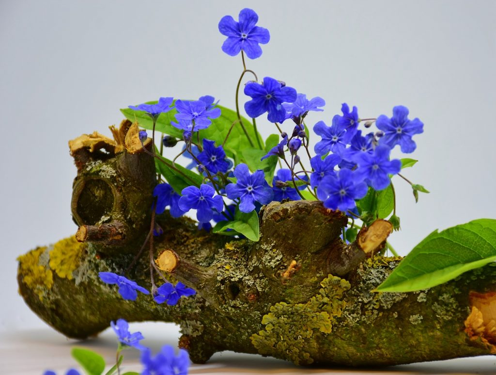 How To Plant Forget-Me-Notst