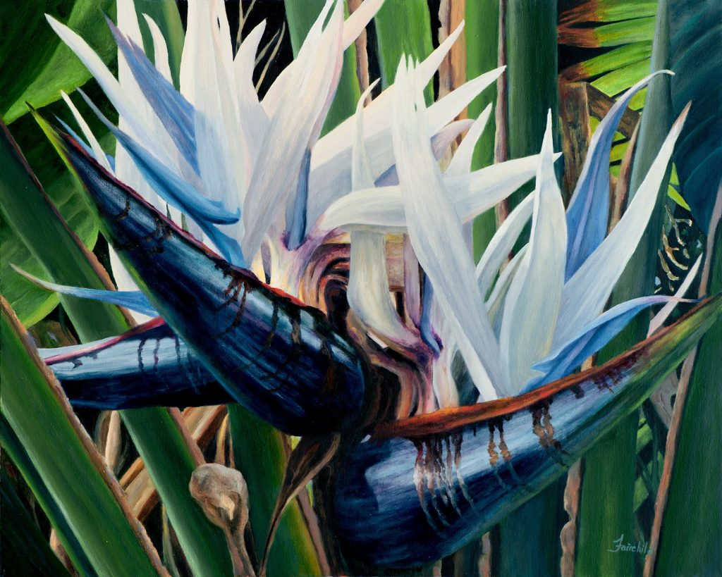 How to Grow the White Bird of Paradise