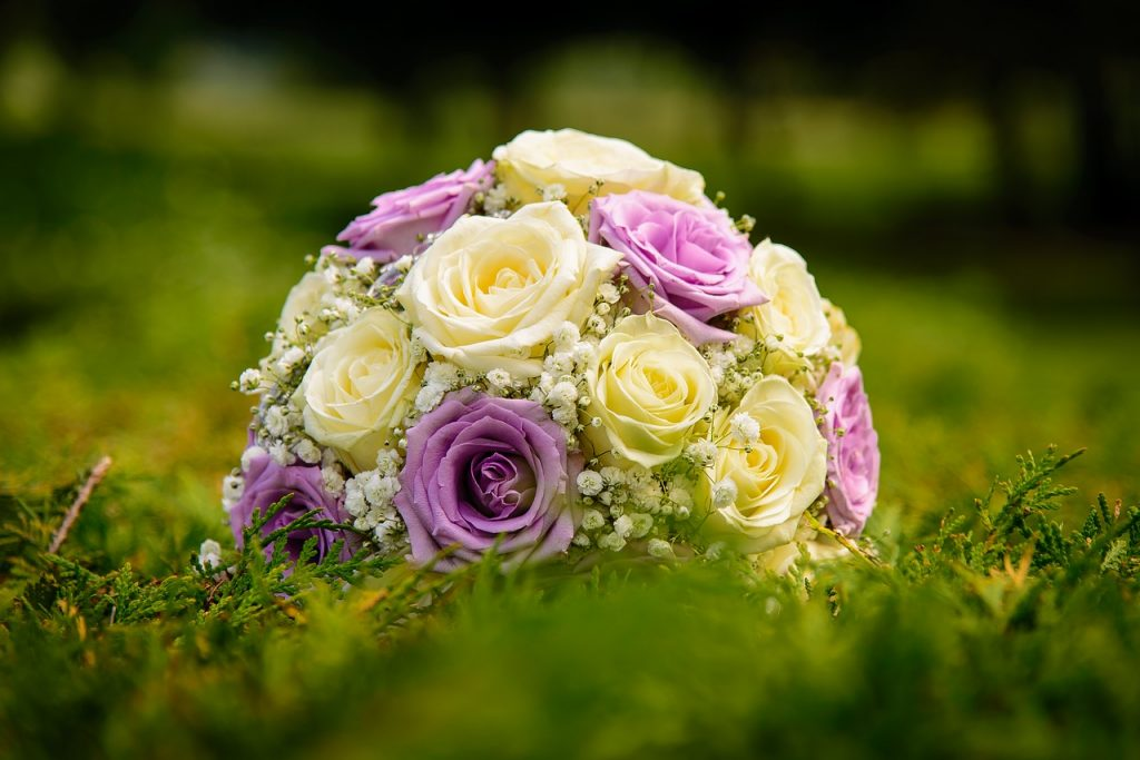 June Birth Flower - rose