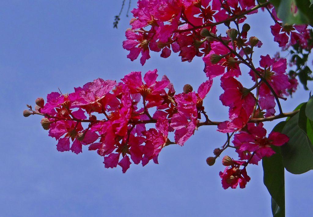 Myrtle Flower Symbolism