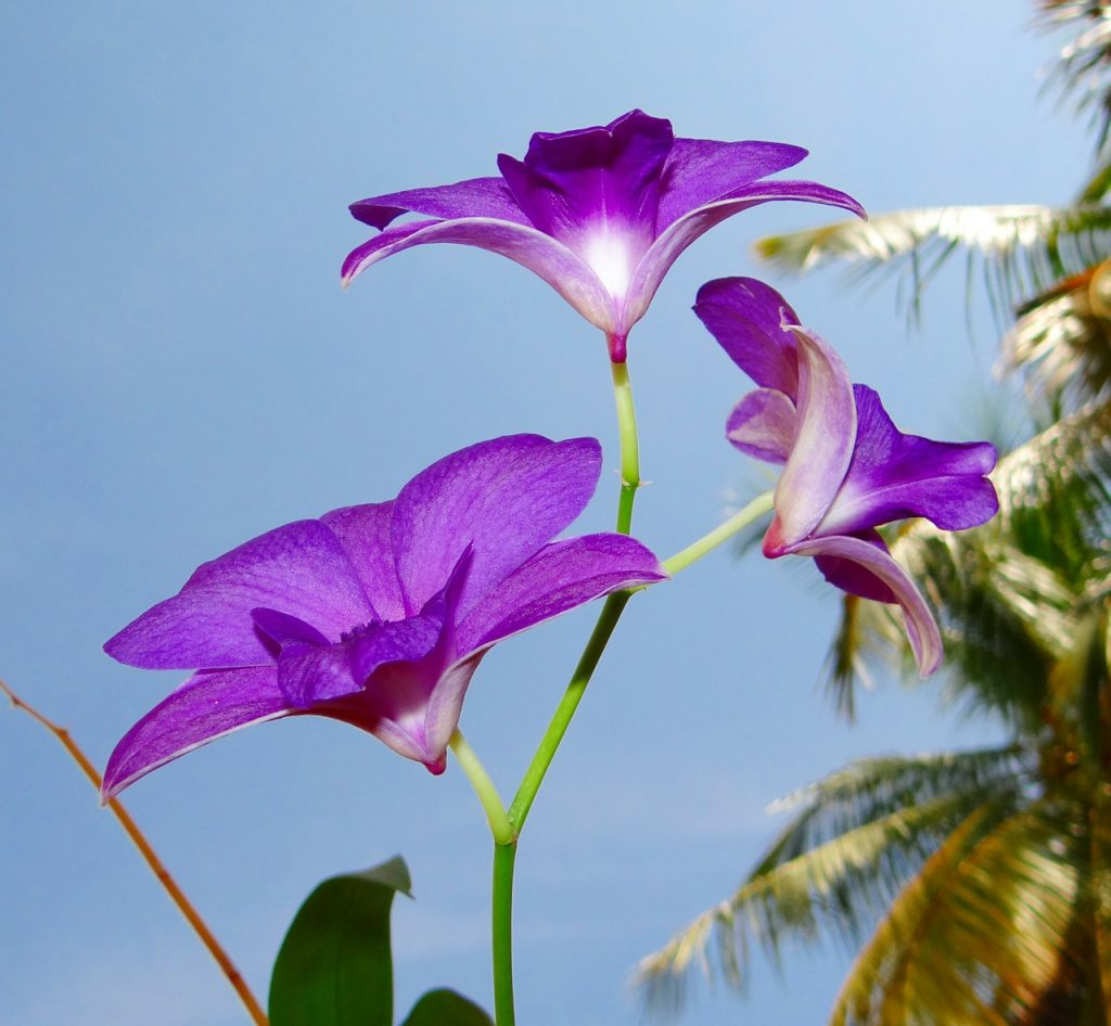 Types of Large Orchids